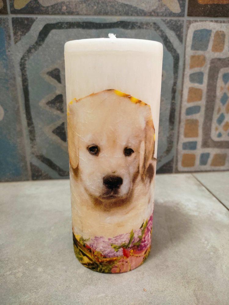 Svíčka - golden štěně